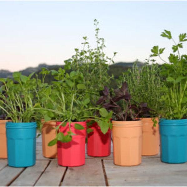 DIY couleurs et senteurs : un mur de plantes aromatiques- Remplir les pots de plantes et les fixer les pots
