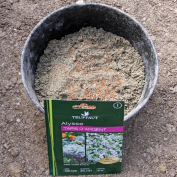 DIY SPÉCIAL JARDIN : UN PETIT COIN À PLANTES GRASSES- Aménager une bande avec des fleurs d'Alysse