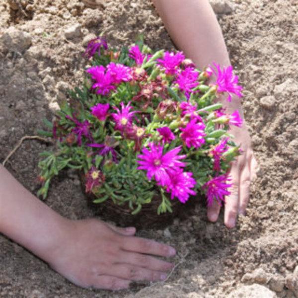DIY SPÉCIAL JARDIN : UN PETIT COIN À PLANTES GRASSES- Mettre en terre les plantes grasses