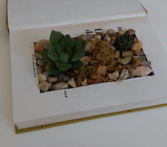 Un mini jardin-Installation des plantes
