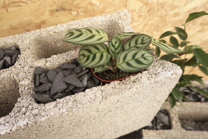 Recyclez vos parpaings en jardinière -Jardiner