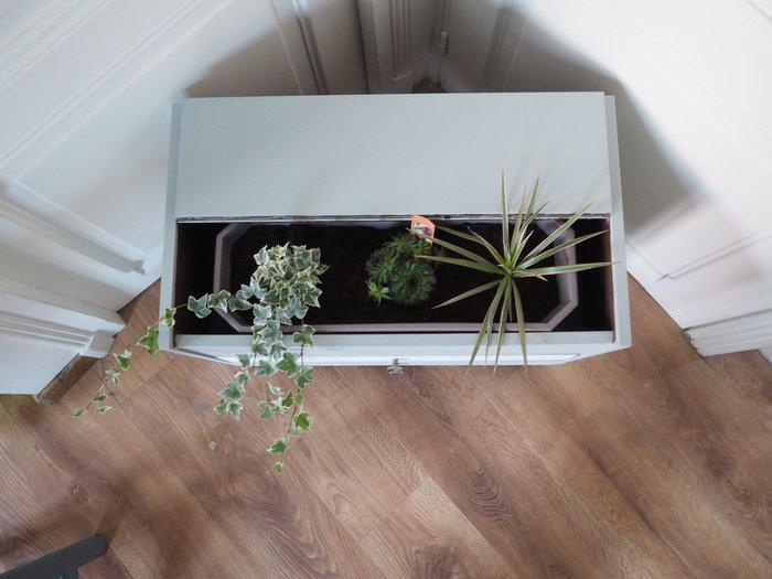 Transformer un meuble de chevet en jardinière nature-Etape 3 : installer la jardinière et les plantes