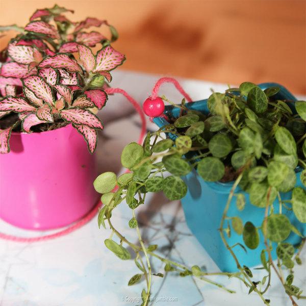 Un petit jardin suspendu-Rempoter les plantes