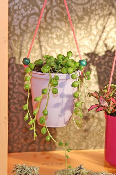 Un petit jardin suspendu-Suspendre les plantes