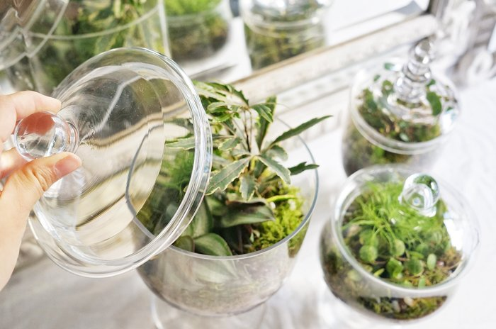 Green upcycling : bonbonnières vertes-Entretenir vos terrariums