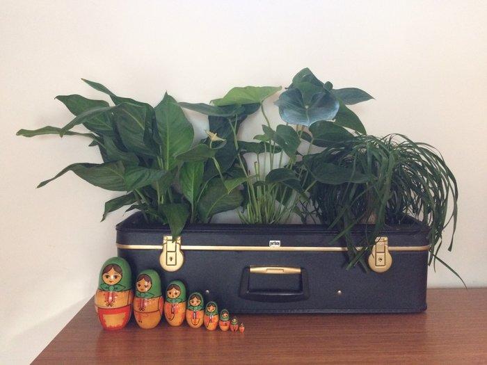 Transformer une valise en jardinière retro-Et voila, la valise est prête à nous emmener au pays du Green!