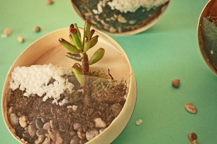 Mini terrarium et upcycling !-Remplir le mini terrarium