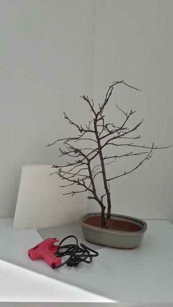L'arbre aux papillons-La plantation de l'arbre