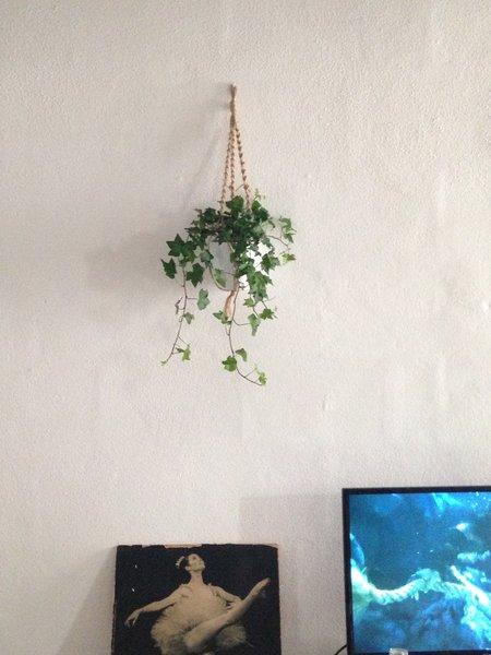 DIY // Suspension de plante en macramé-Etape 4 : Déposez votre plante, accrochez votre suspension.