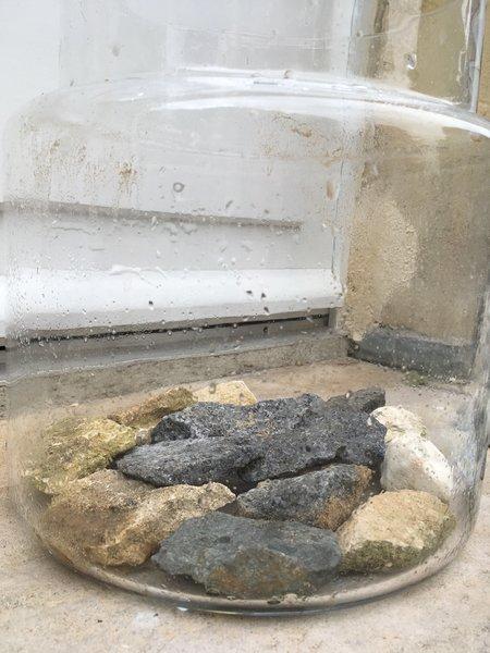 Terrarium de plantes grasses-Etape 2: Première couche : les gros cailloux