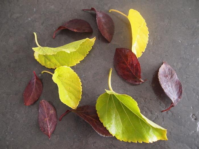 DIY : paquets cadeau nature et récup'-Préparation des feuilles et des fonds
