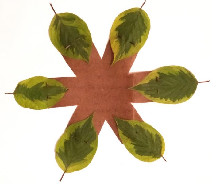 Un cocon de feuilles pour emballer vos cadeaux !-L'assemblage