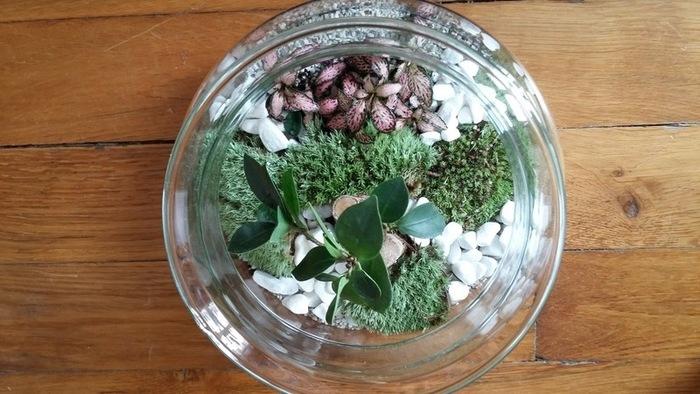 Fabriquer un terrarium-Résultat
