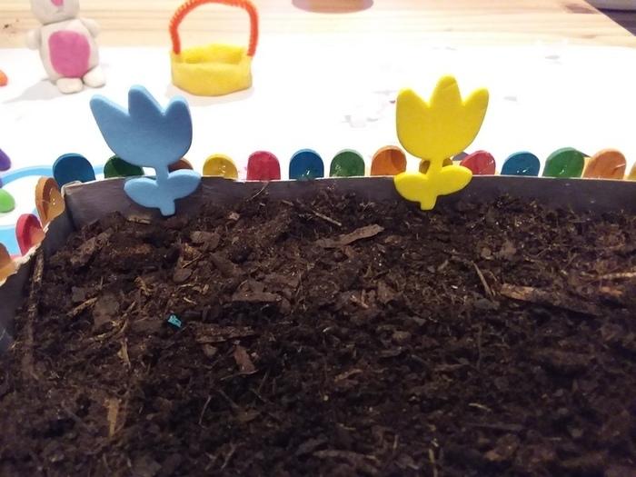 Mini Jardin -Plantons des fleurs !
