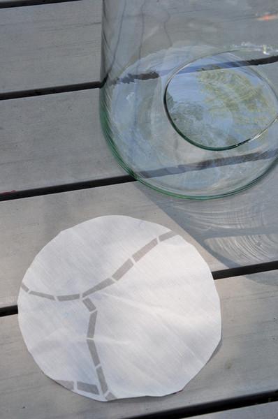 Un terrarium de laboratoire-Le terrarium
