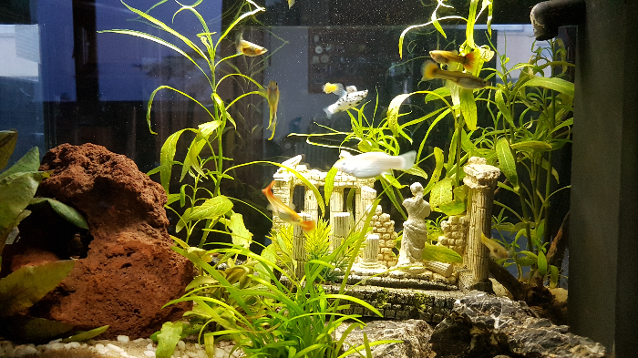 DIY Monitoring Aquarium connecté - AquaPi-Eclairage par bandes de Leds 12v