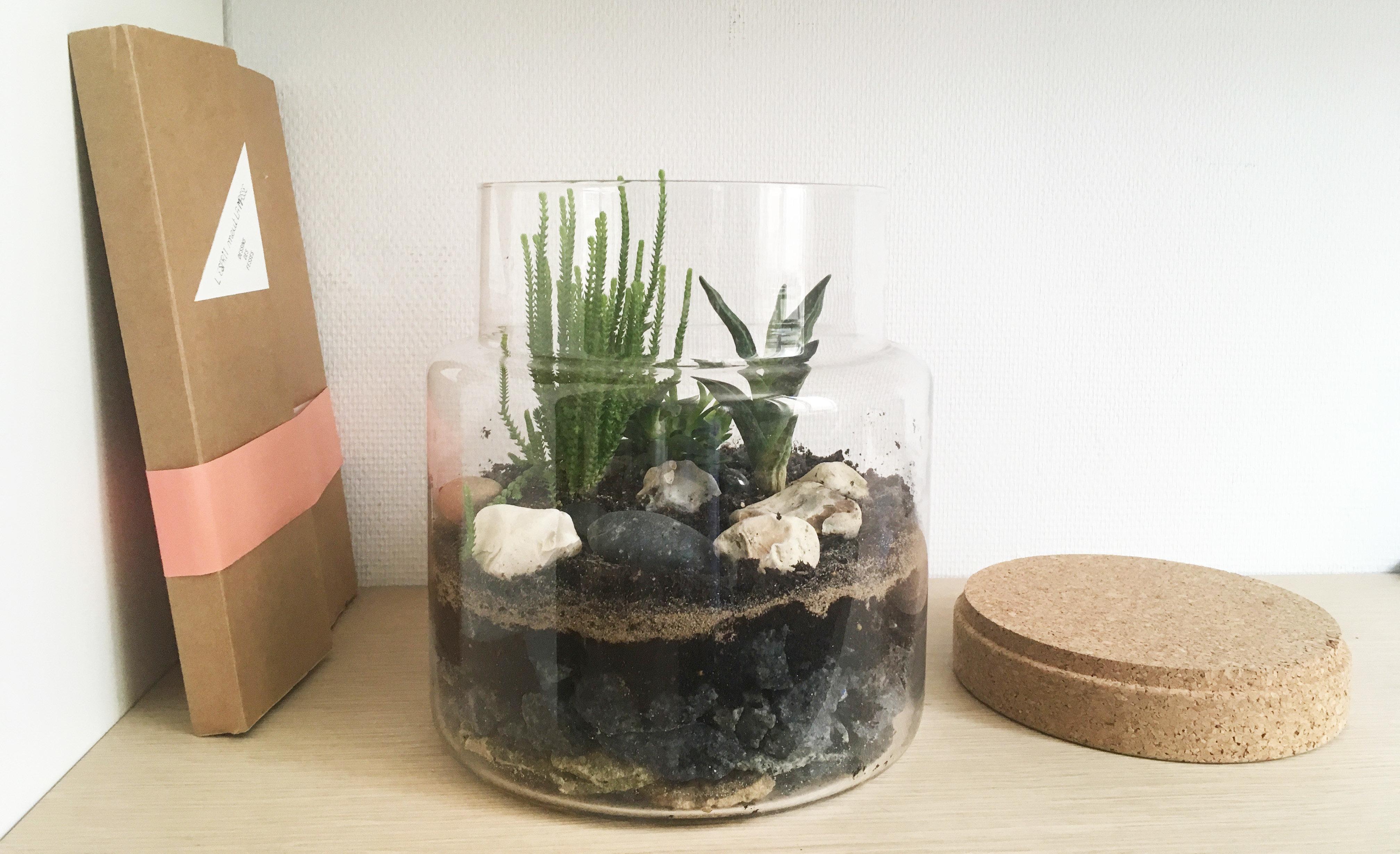 terrarium de plantes grasses