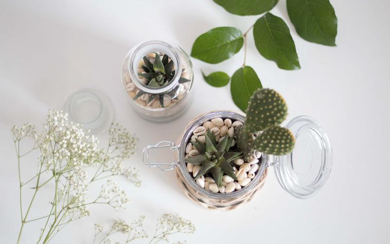 Un Terrarium A Cactus Oui Are Makers Partageons Notre Creativite