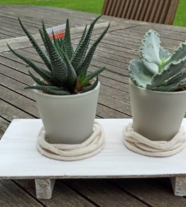 Déco pour plantes succulentes